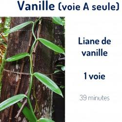 Vanille 1 voie (A)