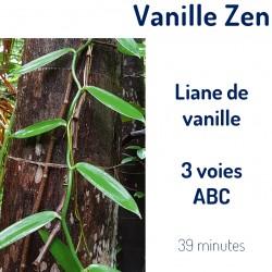 Vanille 3 voies (ABC)