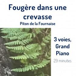 Fougère au Piton de la...
