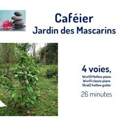 Jardin des Mascarins  Caféier
