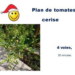 Tomate cerise du jardin