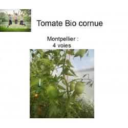 Tomate Bio cornue