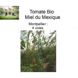 Tomate Bio Miel du Mexique